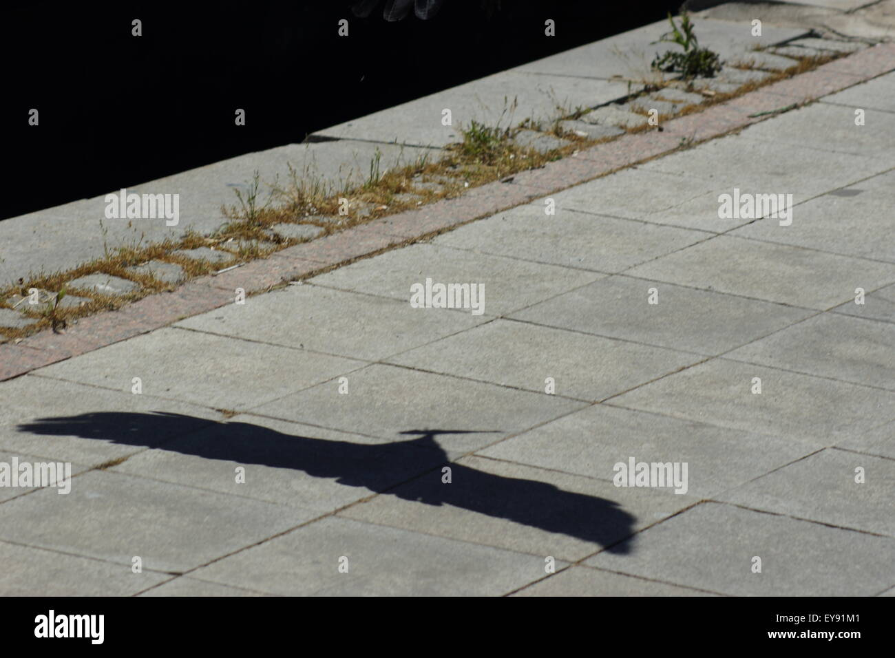 Shadow of falcon with prey Istanbul sidewalk - Stock Image