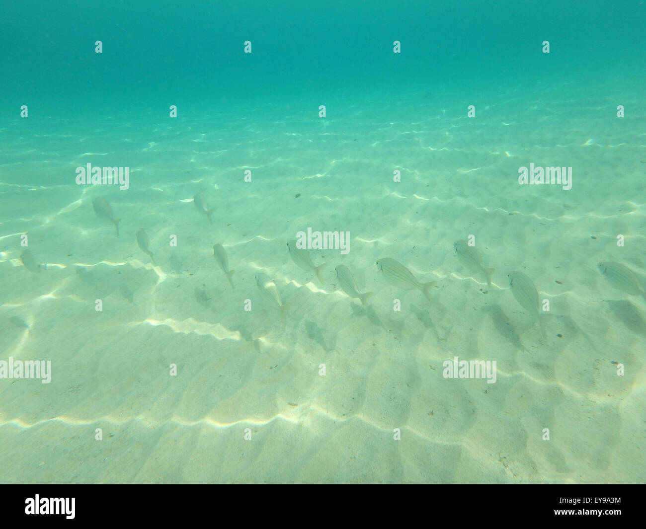 Underwater photo capturing the world bellow the sea level. - Stock Image