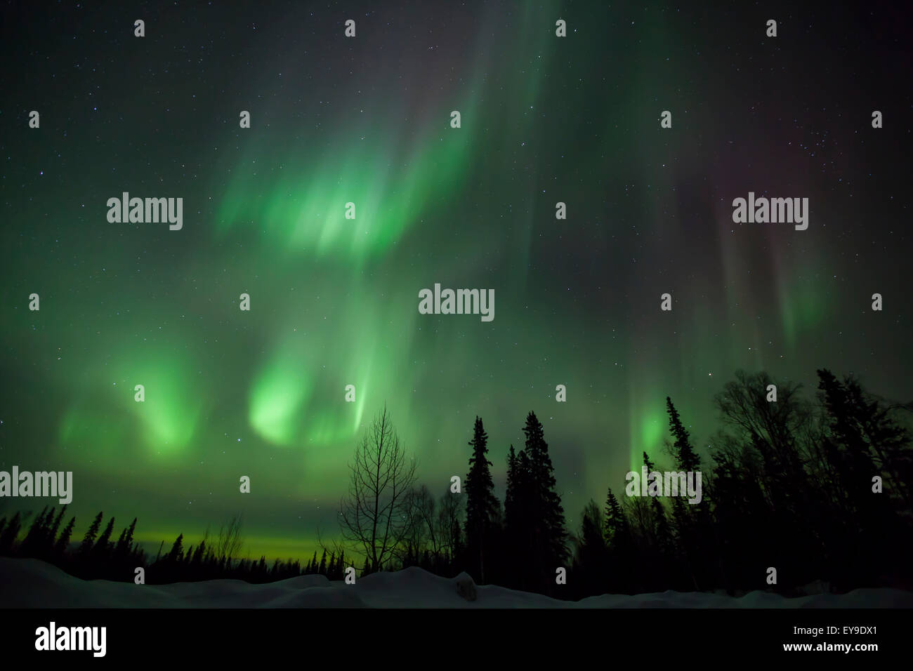 The green glow of the Aurora Borealis (Northern Lights) from the Petersville Road, Southcentral Alaska, Winter Stock Photo