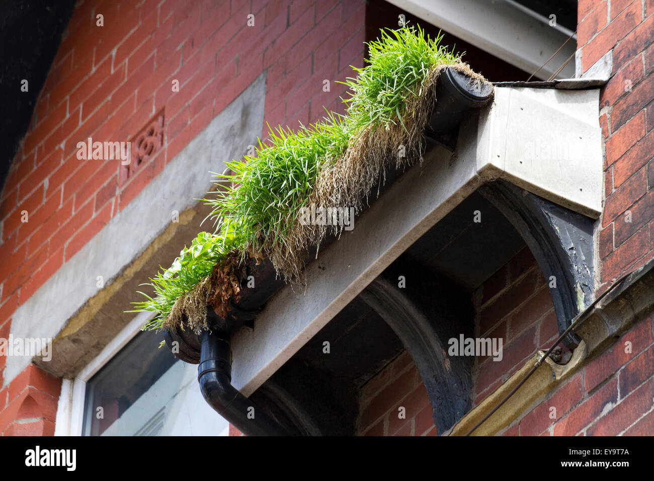 Building decay and overgrown guttering in Blackpool Town Centre, Lancashire. UK - Stock Image