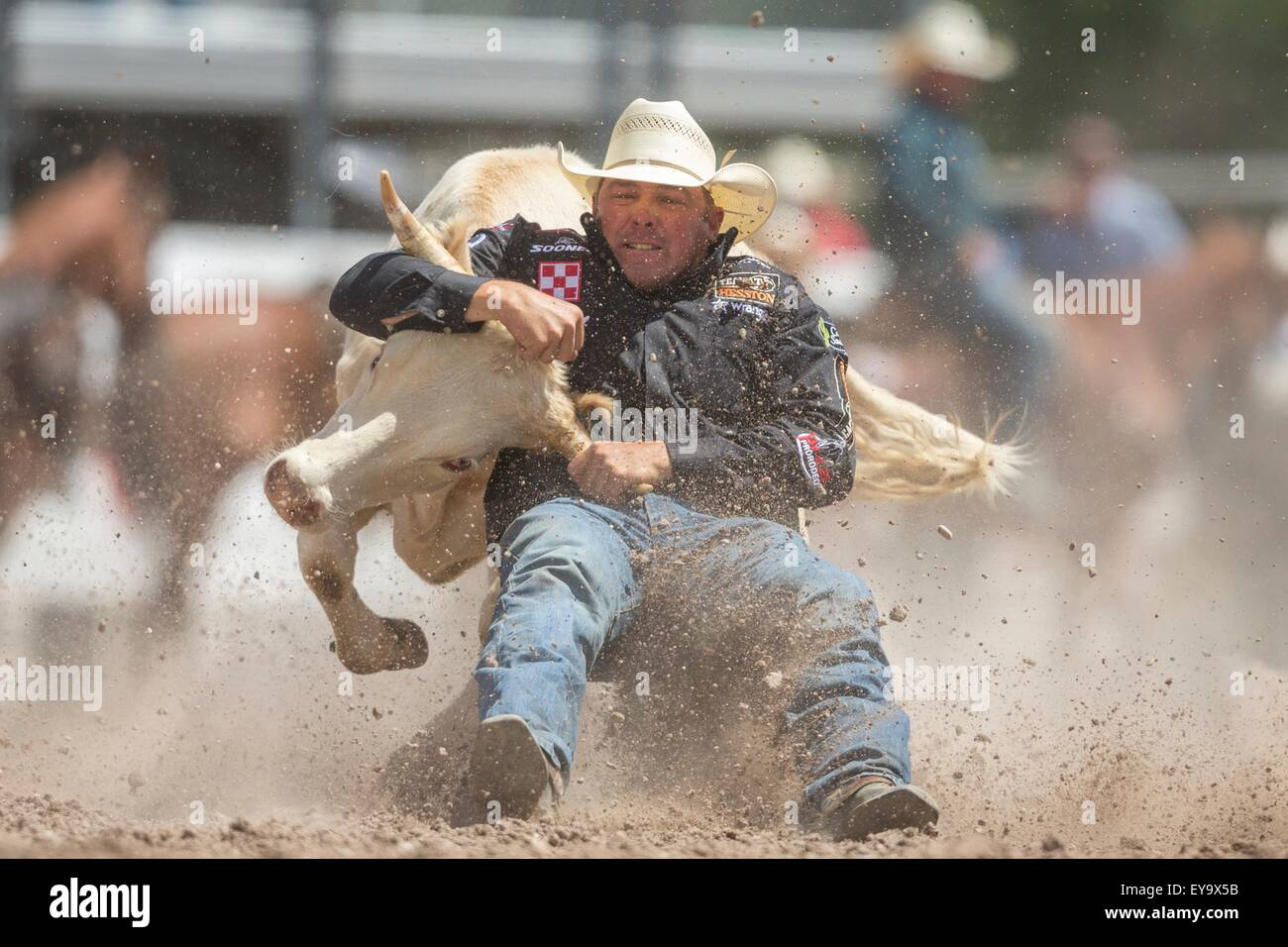 Cheyenne, Wyoming, USA. 24th July, 2015. Steer Wrestler K.C. Jones of Decatur, Texas grabs the horns of a steer - Stock Image