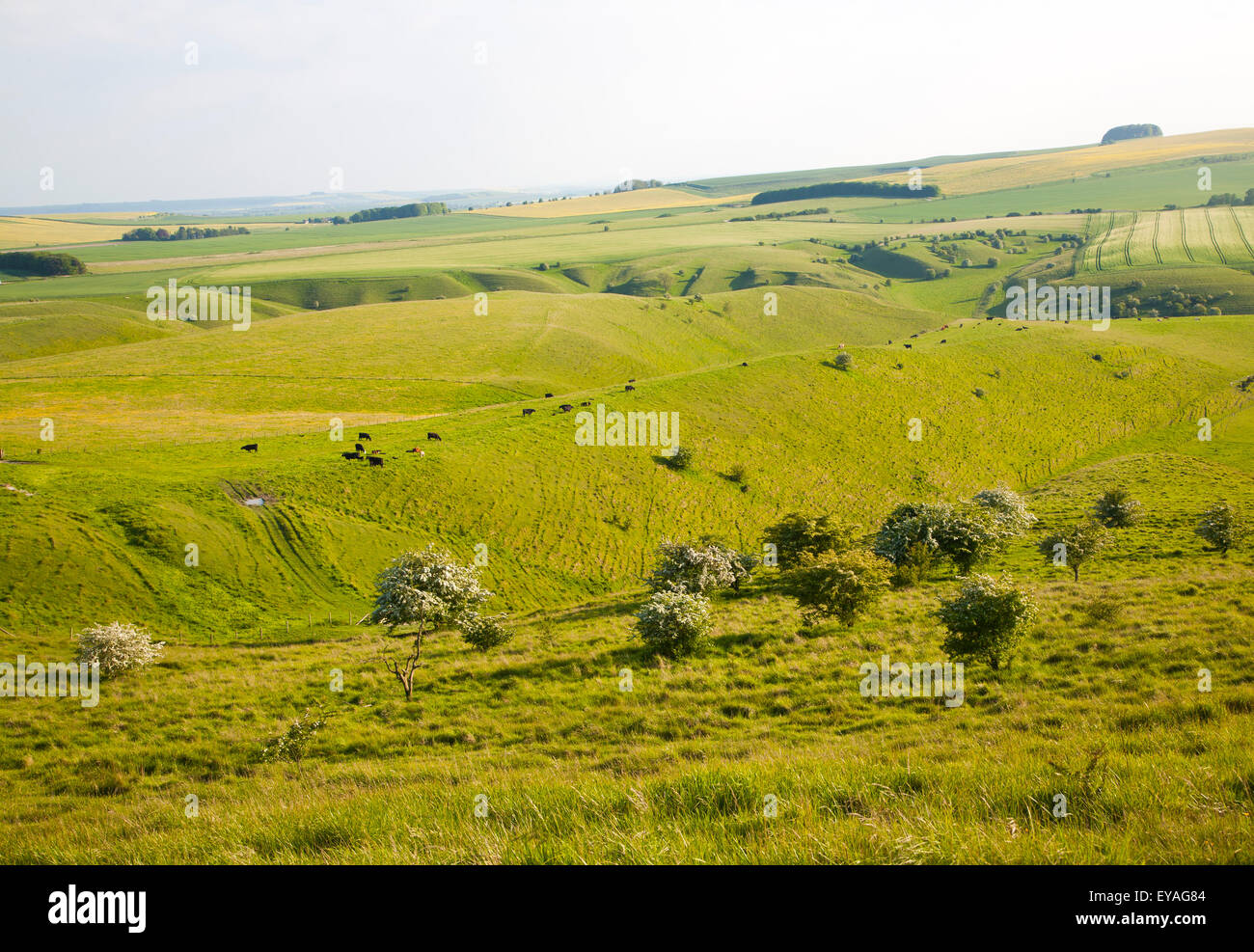 Rolling hills and dry valleys upland chalk landscape, form Cherhiil Down, Wiltshire, England, UK - Stock Image