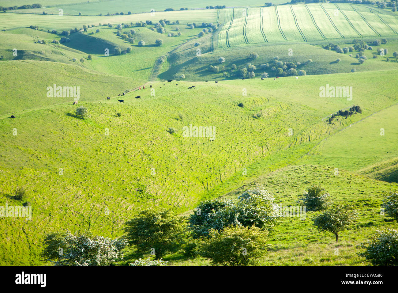 Rolling hills and dry valleys upland chalk landscape, form Cherhill Down, Wiltshire, England, UK - Stock Image