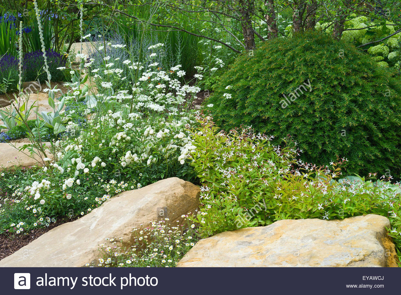 A garden with large stones interplanted with white flowering plants a garden with large stones interplanted with white flowering plants and a clipped mound of evergreen taxus baccata yew workwithnaturefo