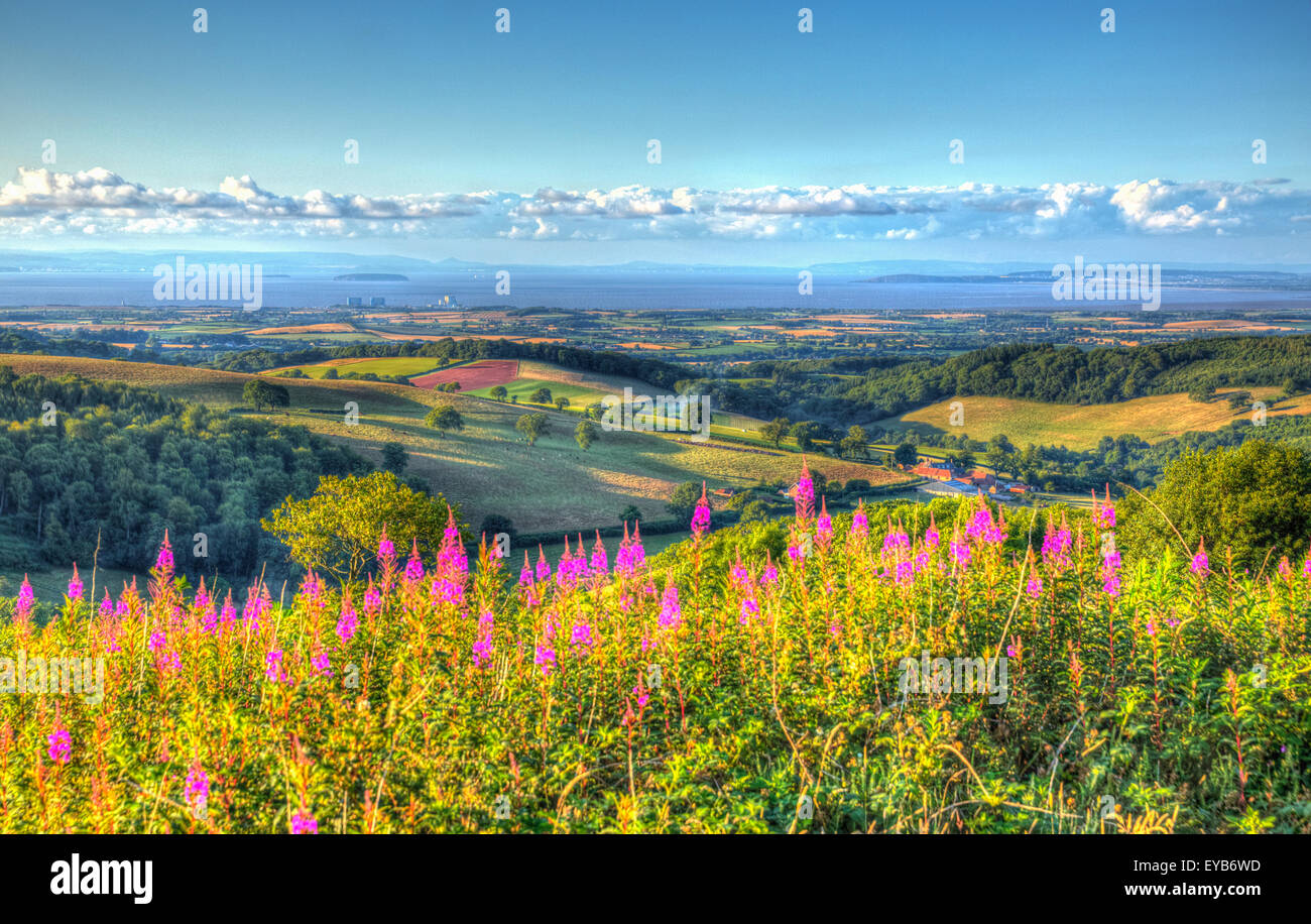 English countryside Quantock Hills Somerset England UK towards Hinkley Point and Bristol Channel in HDR with pink - Stock Image