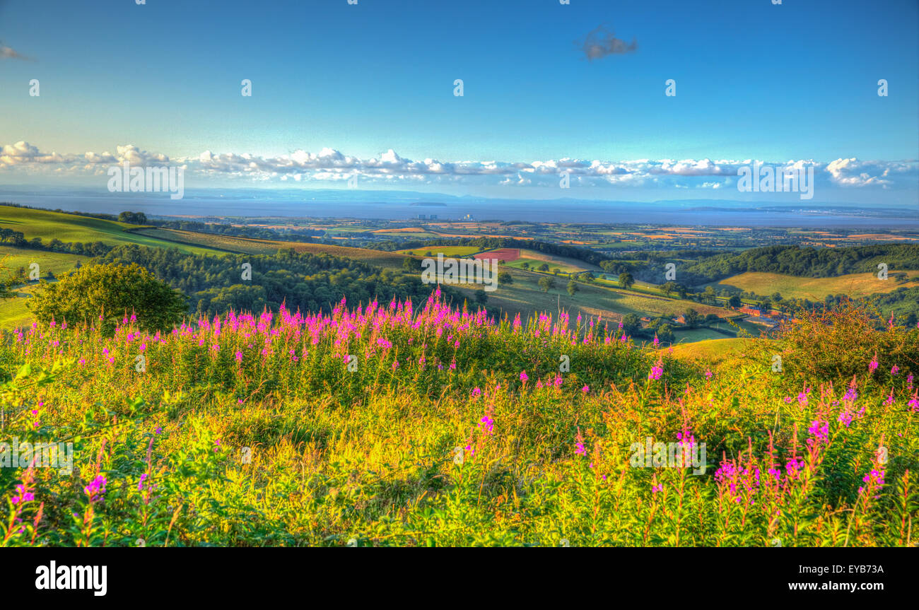 Somerset countryside Quantock Hills England UK towards Hinkley Point and Bristol Channel in HDR with pink flowers - Stock Image
