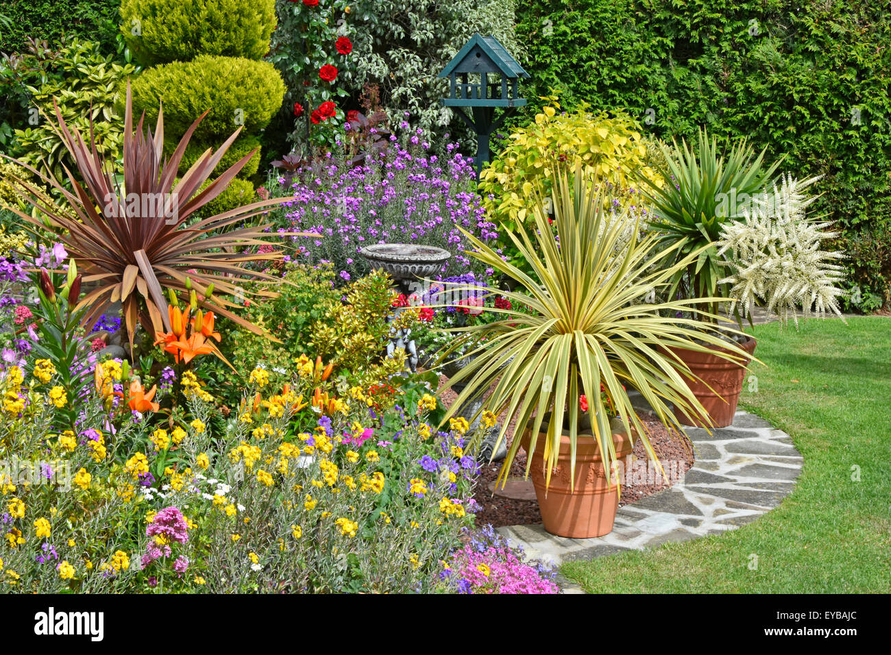 Back garden mixed planting for colour effect & potted plants for flexible varied arrangements with conifer hedge - Stock Image