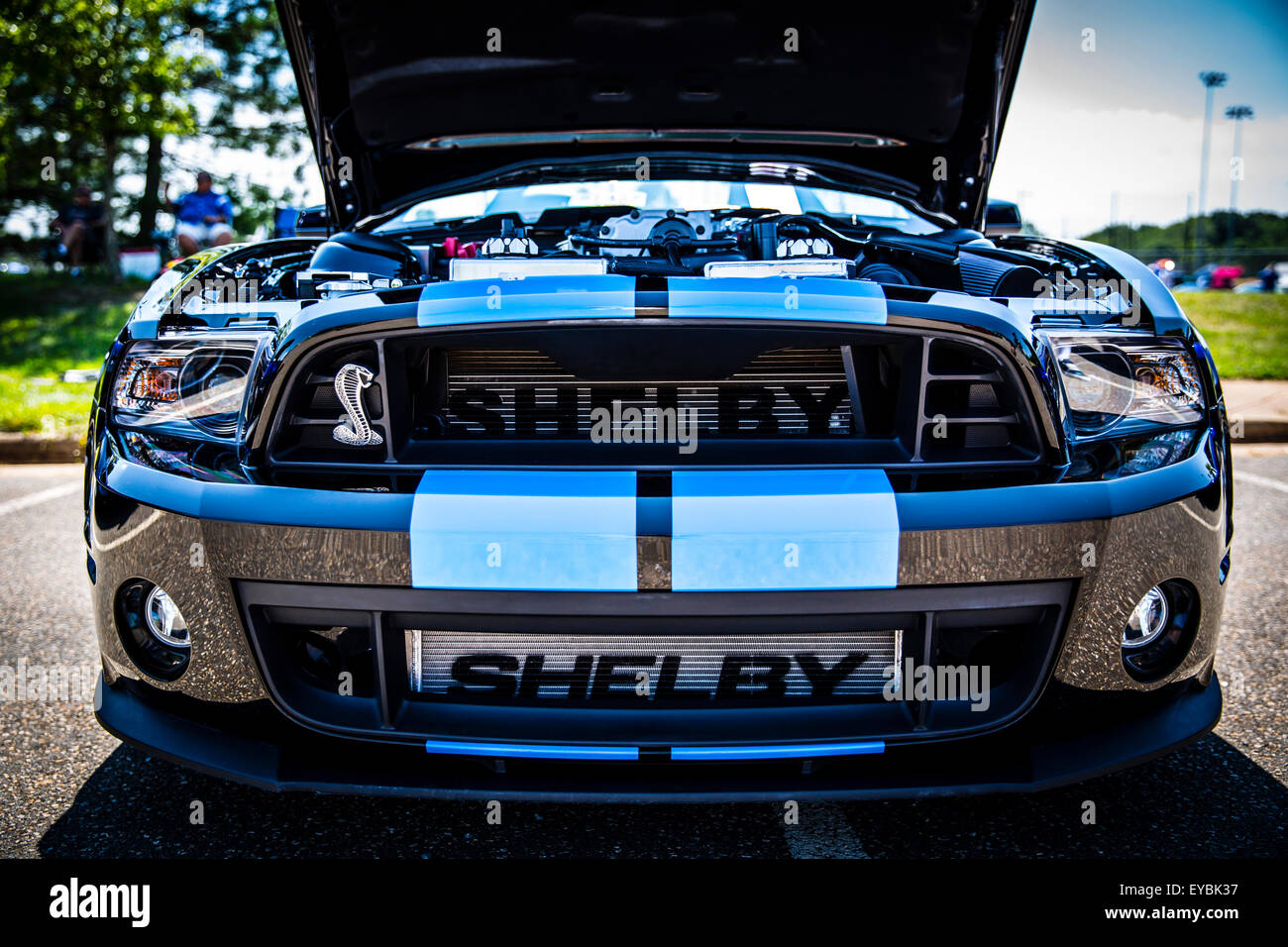 ford mustang shelby gt 500 stock photos ford mustang shelby gt 500 stock images alamy. Black Bedroom Furniture Sets. Home Design Ideas