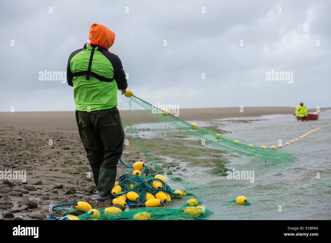 Licensed fishermen using traditional Seine Netting methods on the river Teify (Tivy) at Poppit Sands, west Wales Stock Photo