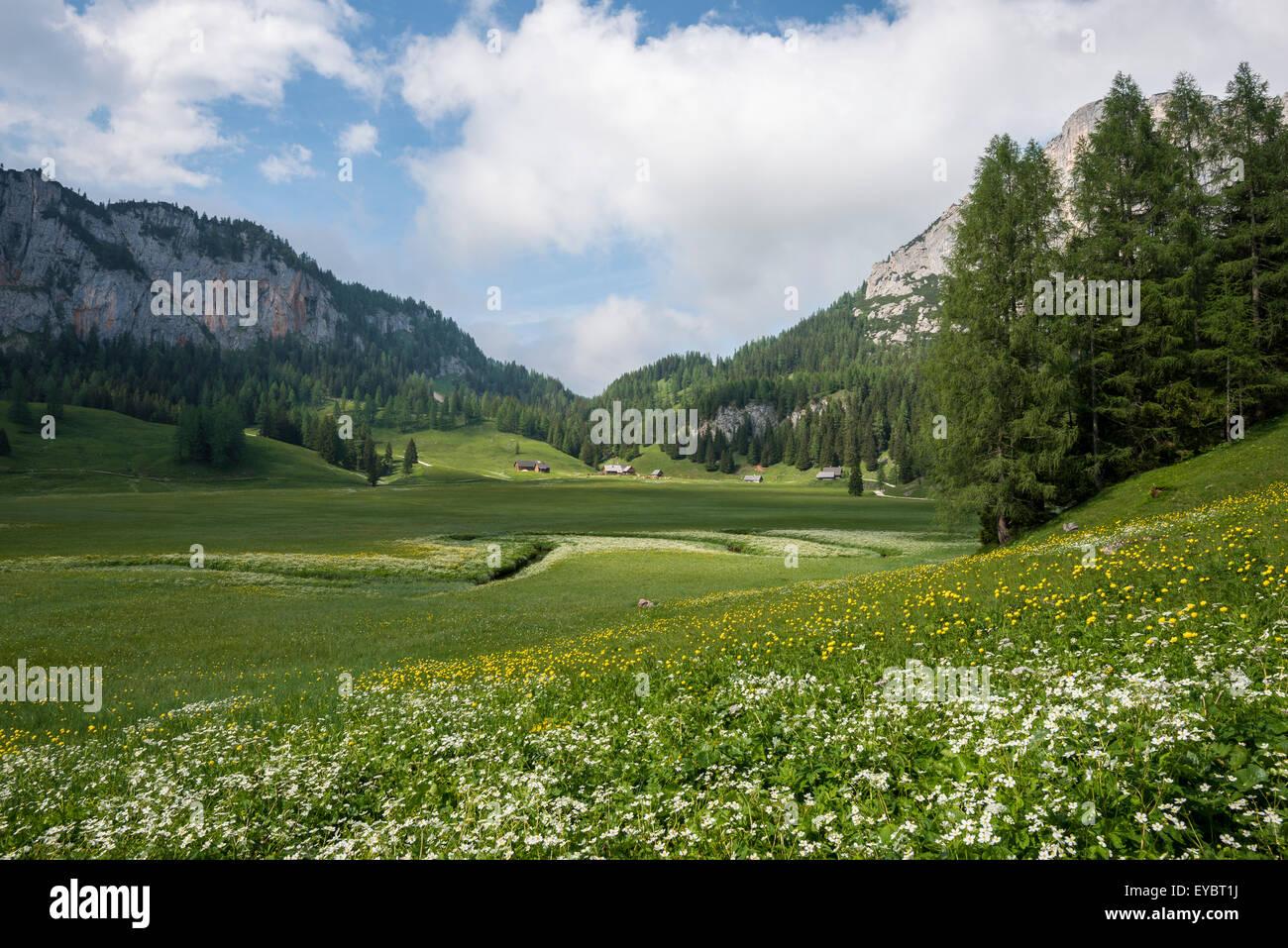 Alpine meadow, Flowers, Wurzeralm Stock Photo