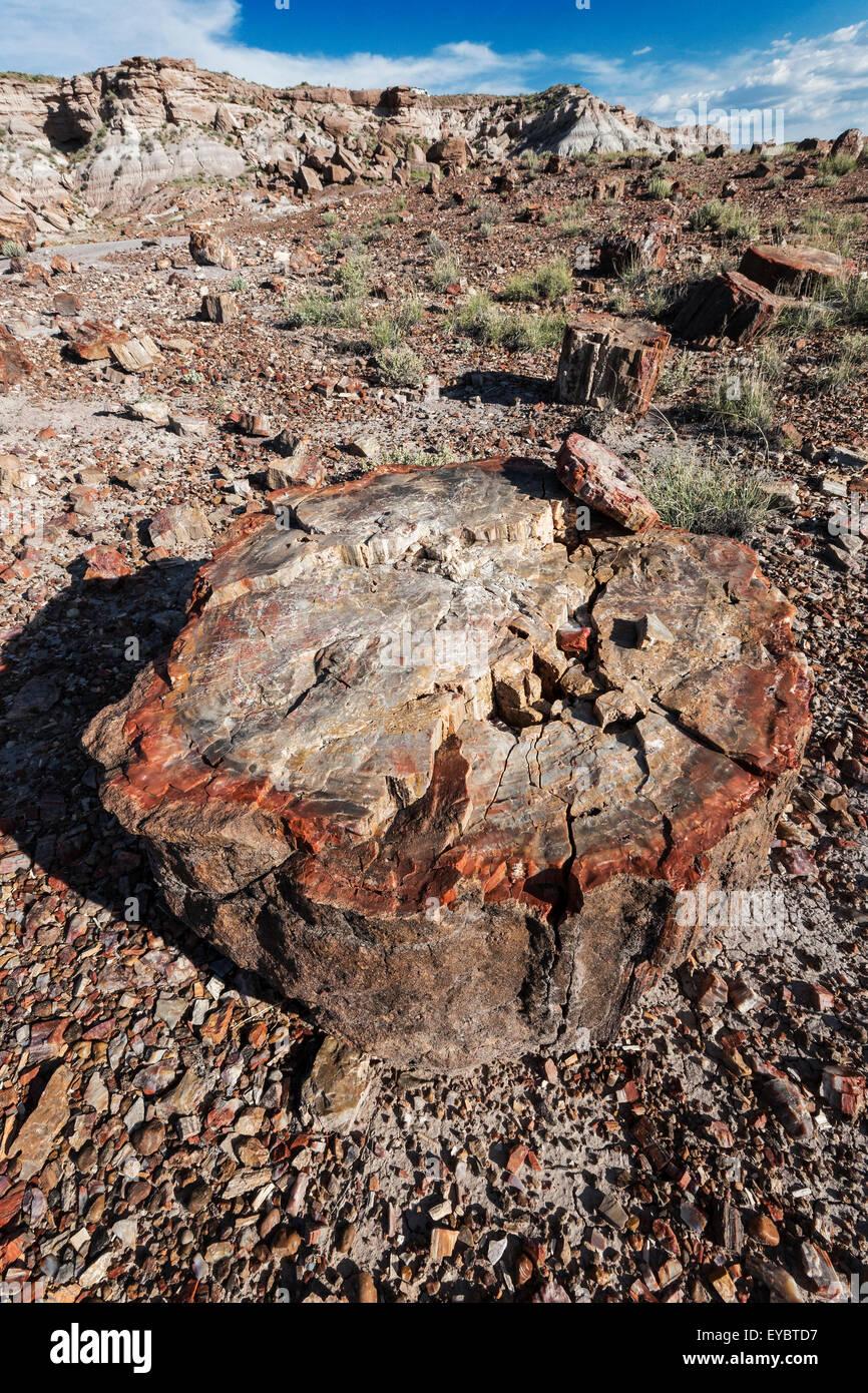 Petrified Forest National Park, Arizona - Stock Image