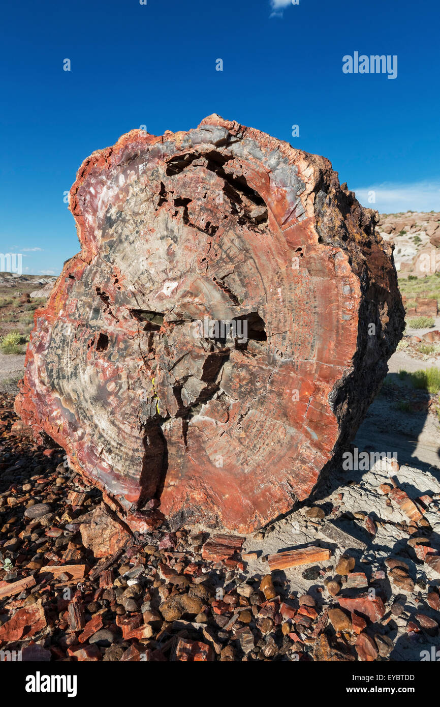 Petrified Wood, Petrified Forest National Park, Arizona - Stock Image