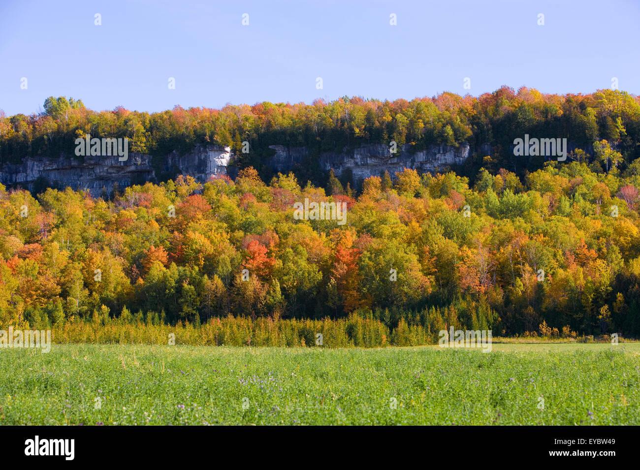 North America, Canada, Ontario, near Wiarton 'Bruce Peninsula' 'Niagara Escarpment' named in 1990 - Stock Image