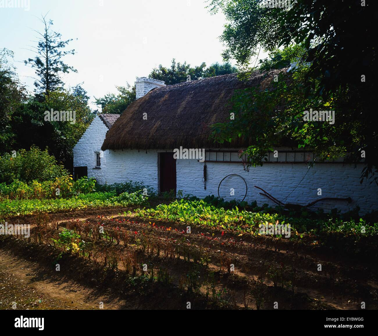 Bunratty Folk Park, Co Clare, Ireland; Thatched Cottage - Stock Image