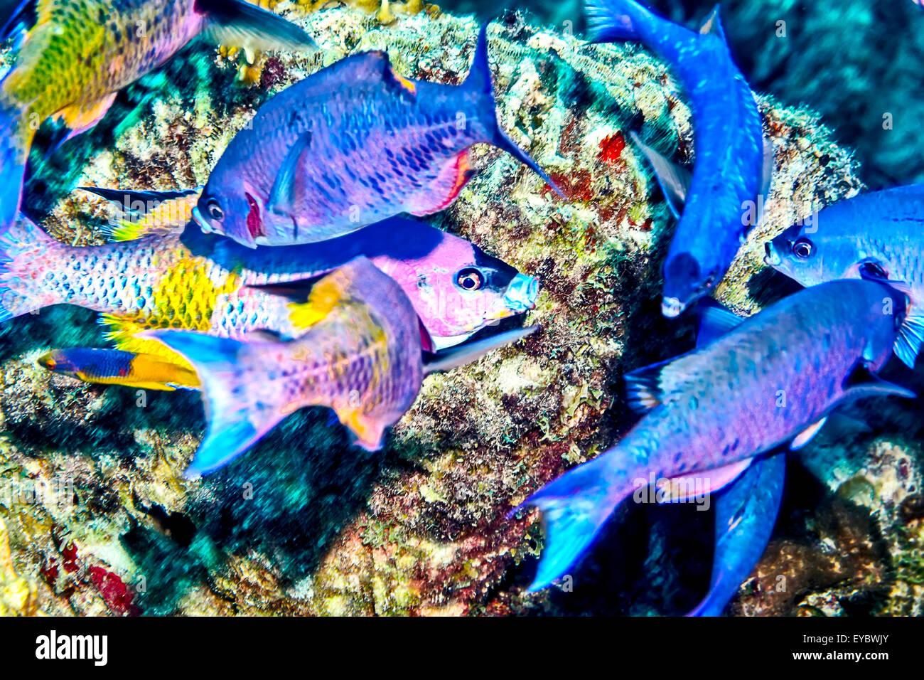 Underwater Wildlife - Stock Image