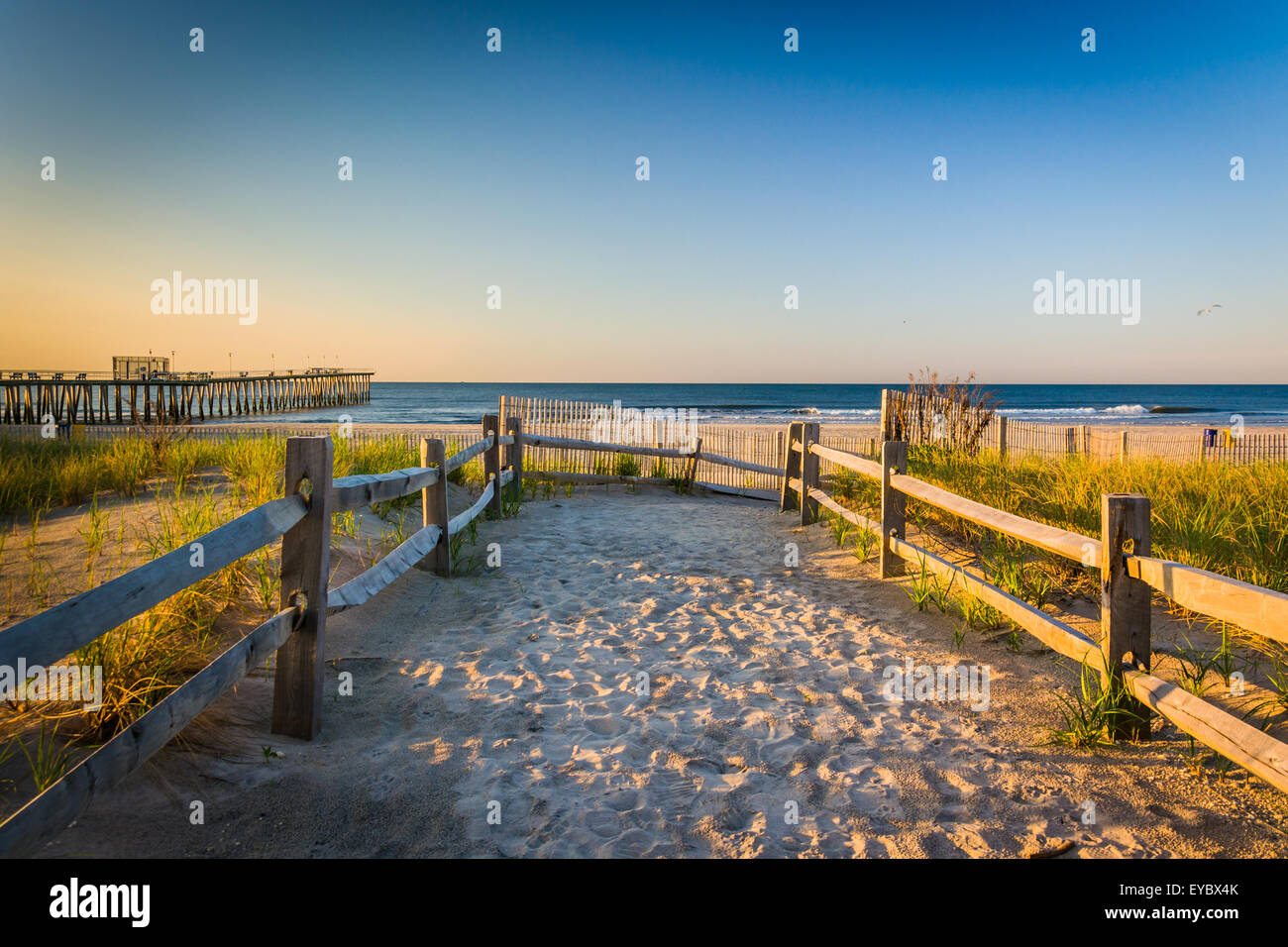 Path over sand dunes to the Atlantic Ocean at sunrise in Ventnor City, New Jersey. - Stock Image