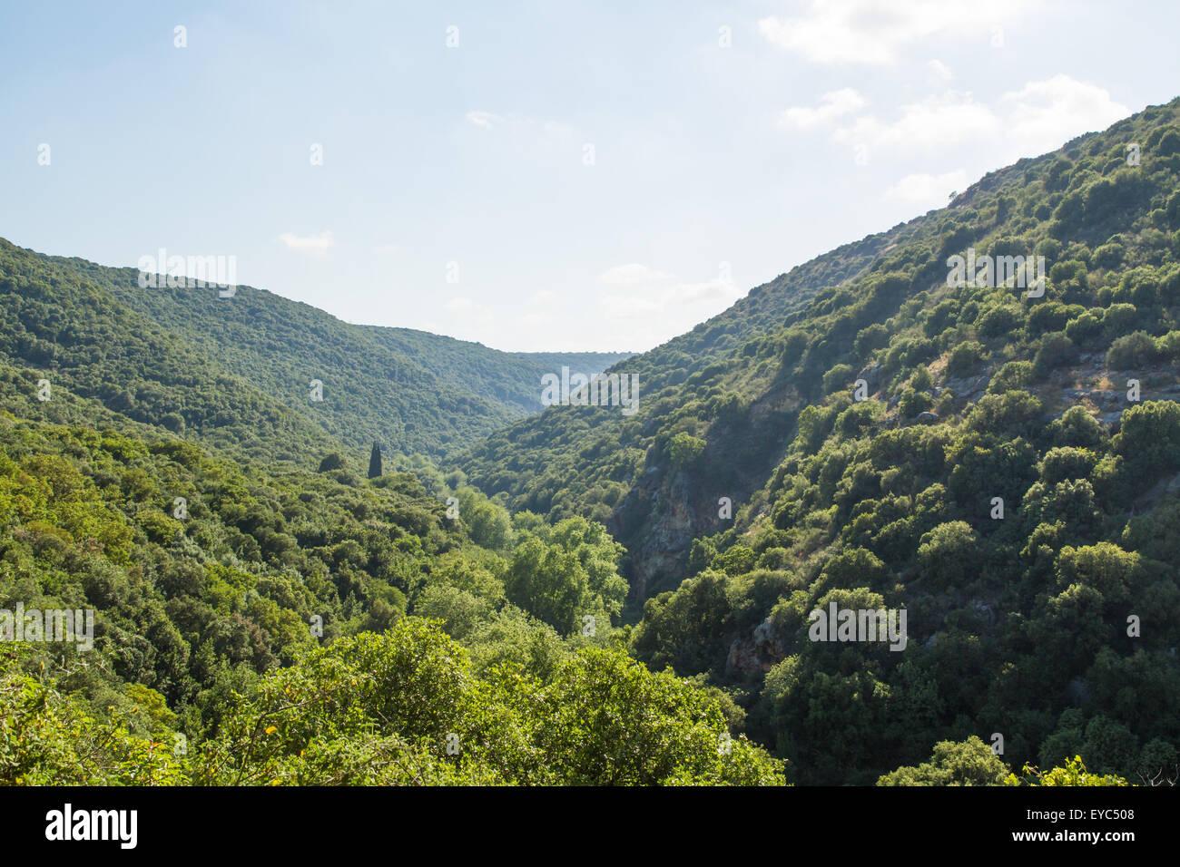 Israeli Mediterranean flora with a huge variety  of species. Upper Galilee. Stock Photo
