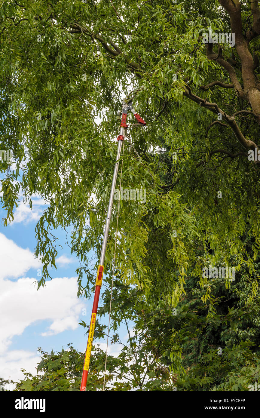 Long handled tree lopper. - Stock Image