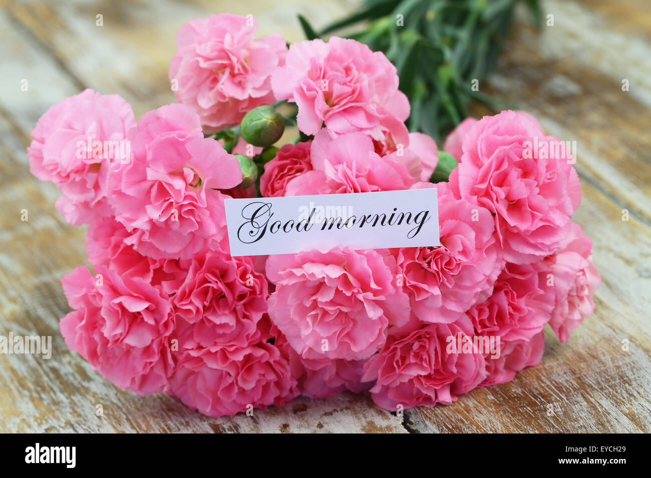 Flower Gud Morning Beautiful Flowers 2019 Beautiful Flowers