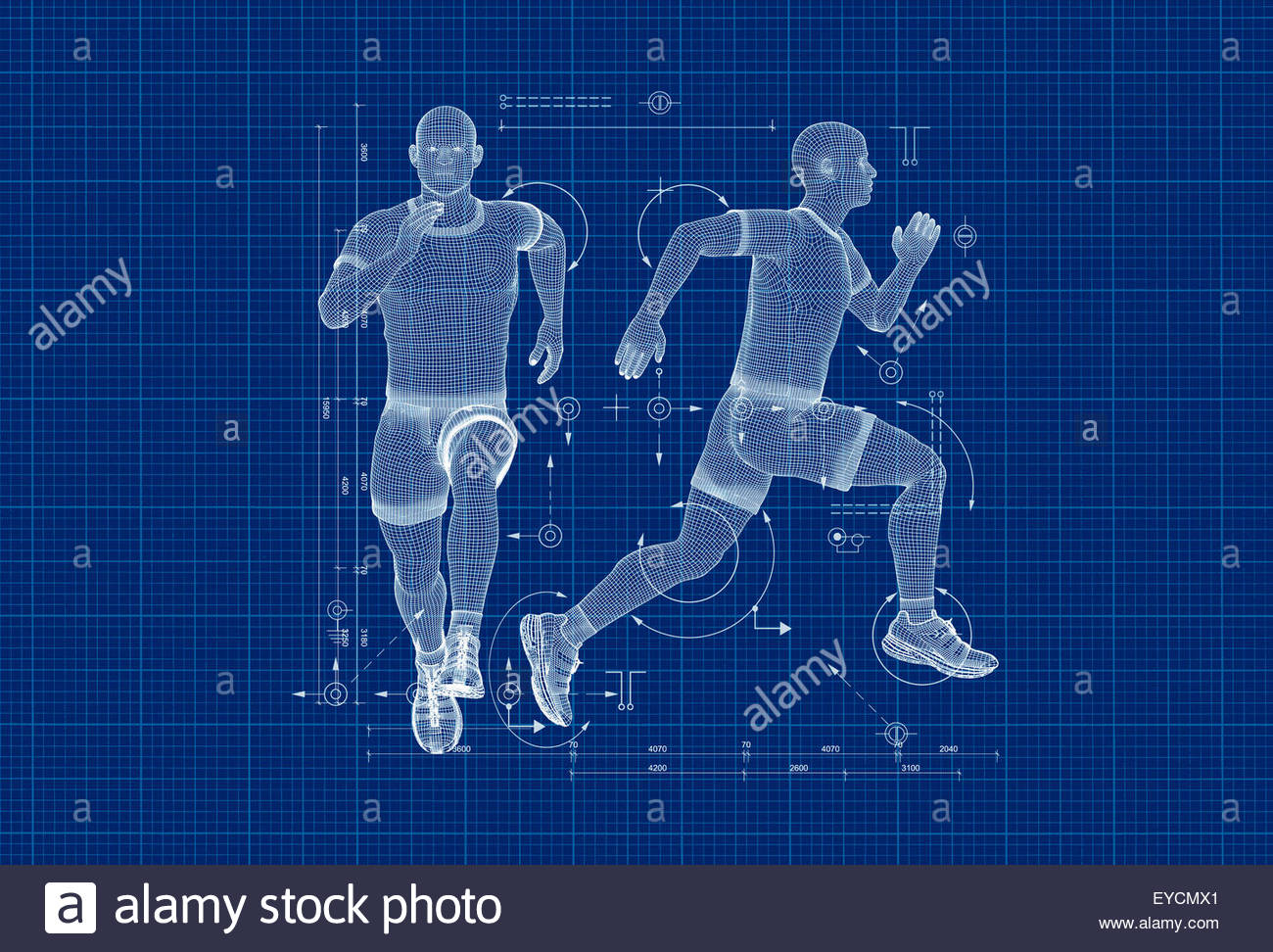 Anatomical model and diagram of man running - Stock Image