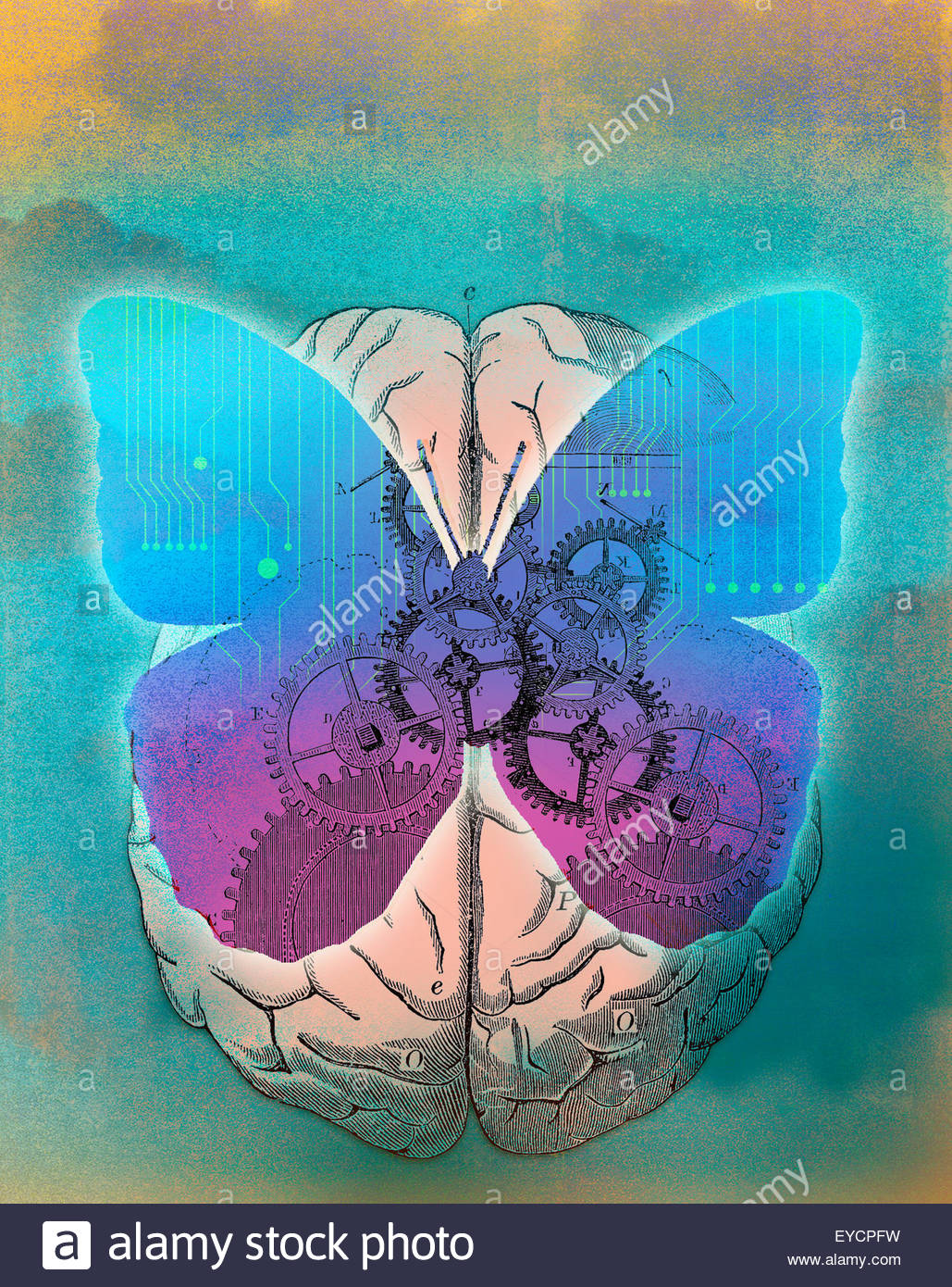 Butterfly with cogs and circuit board on top of human brain - Stock Image