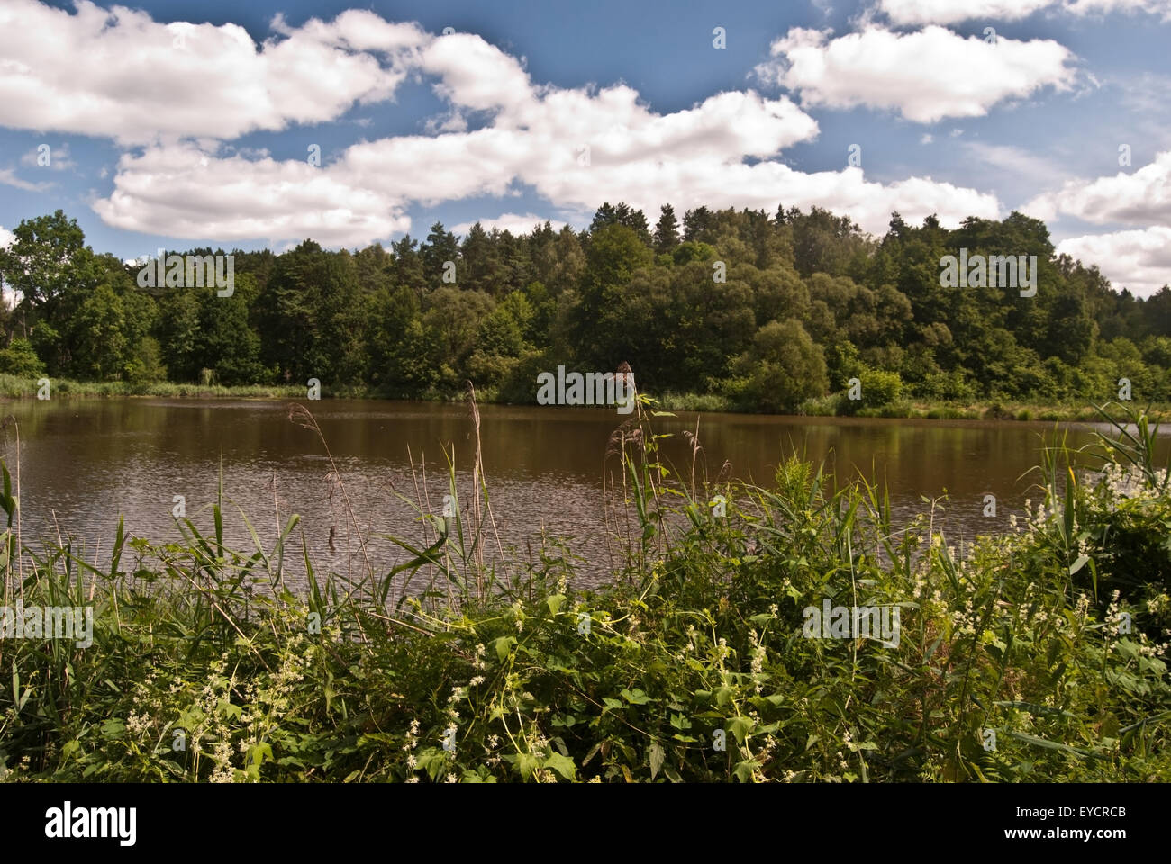 little pond near Rybnik city in Poland - Stock Image