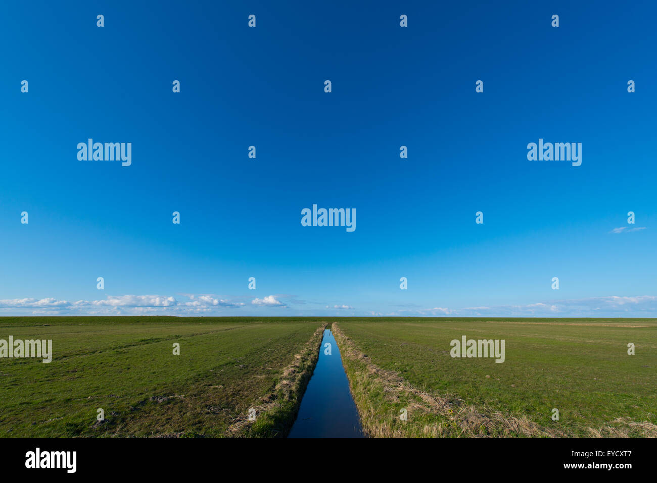 A green Dutch polder (reclaimed land) and its ditches & gullies reflecting the blue winter sky running to infinity - Stock Image