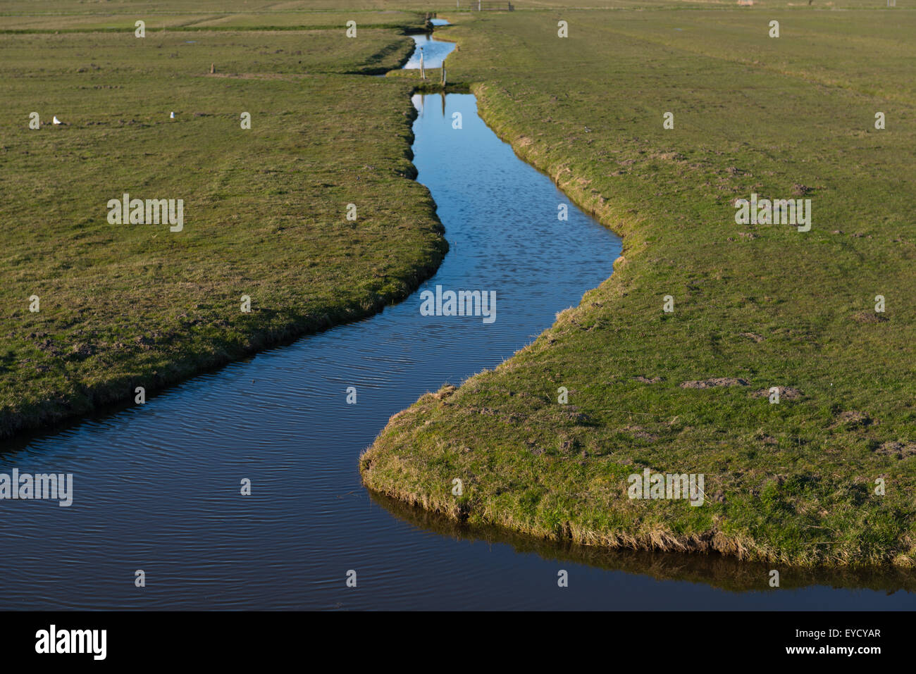 A green Dutch polder (reclaimed land) and its ditches & gullies reflecting the blue winter sky near Broek in - Stock Image