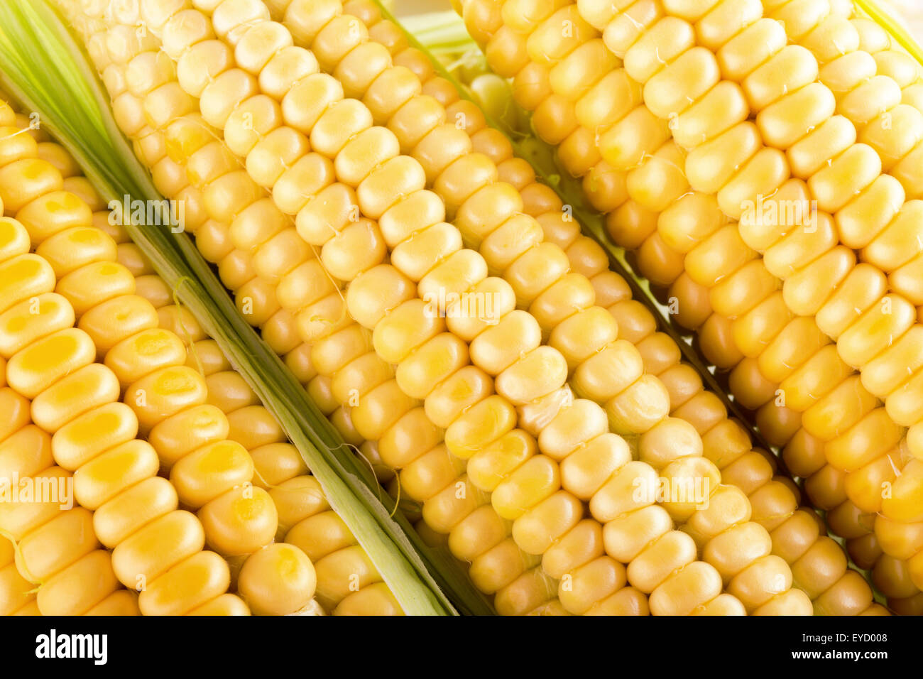 close up of fresh corn ears. - Stock Image