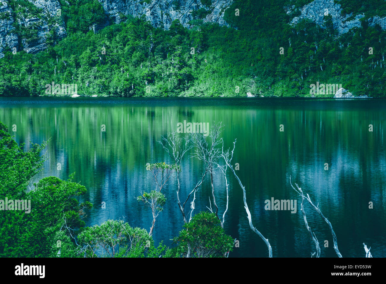 Reflection of mountain and bush in the waters of Lake Crater in Cradle Mountain National Park - Stock Image
