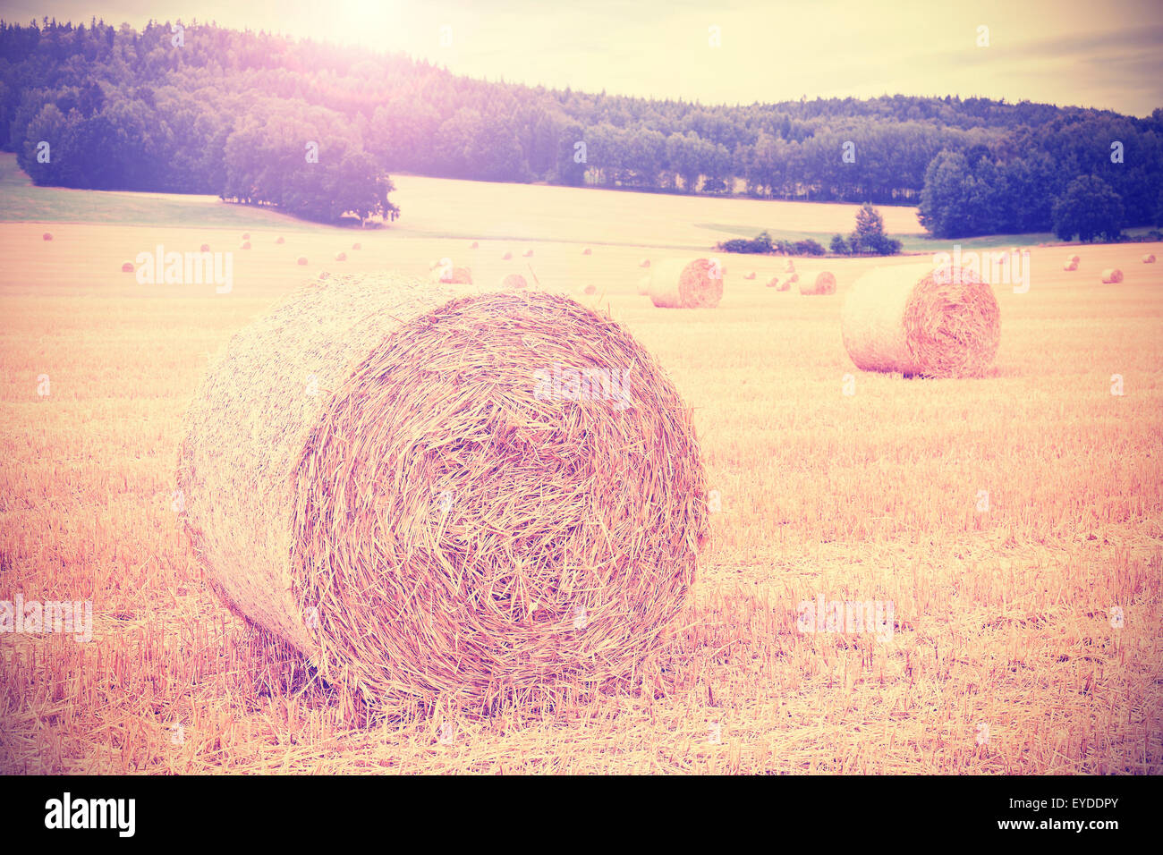 Vintage instagram toned harvested field with hay bales. Stock Photo