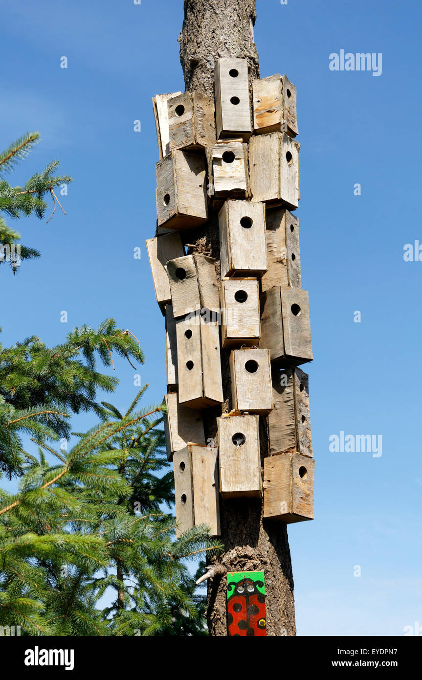 Fantastic A Cluster Of Unpainted Wooden Bird Houses On A Dead Tree Download Free Architecture Designs Scobabritishbridgeorg