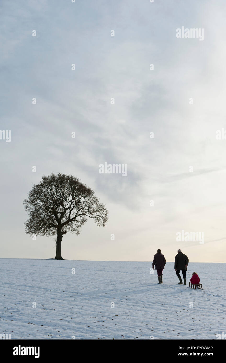 Couple Pulling Child On Sledge Up Hill Covered In Snow Towards Solitary Oak Tree,Petersfield, Hants, Uk - Stock Image