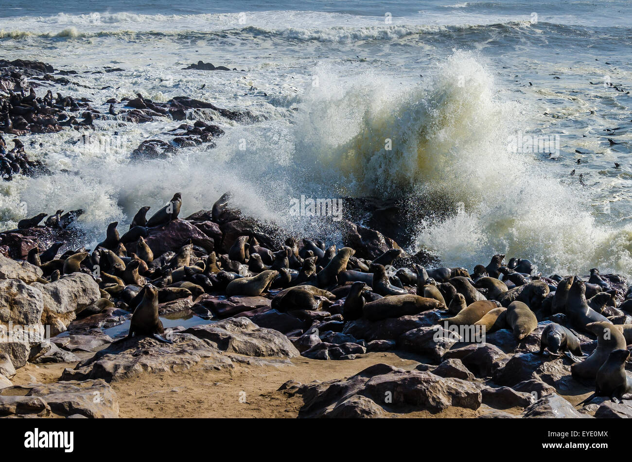 Sealion colony and pounding waves, Cape Cross, Namibia - Stock Image
