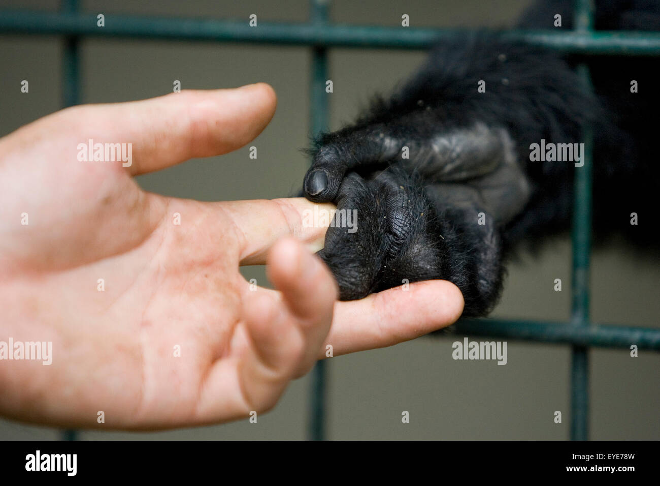 Zoo animals - Stock Image
