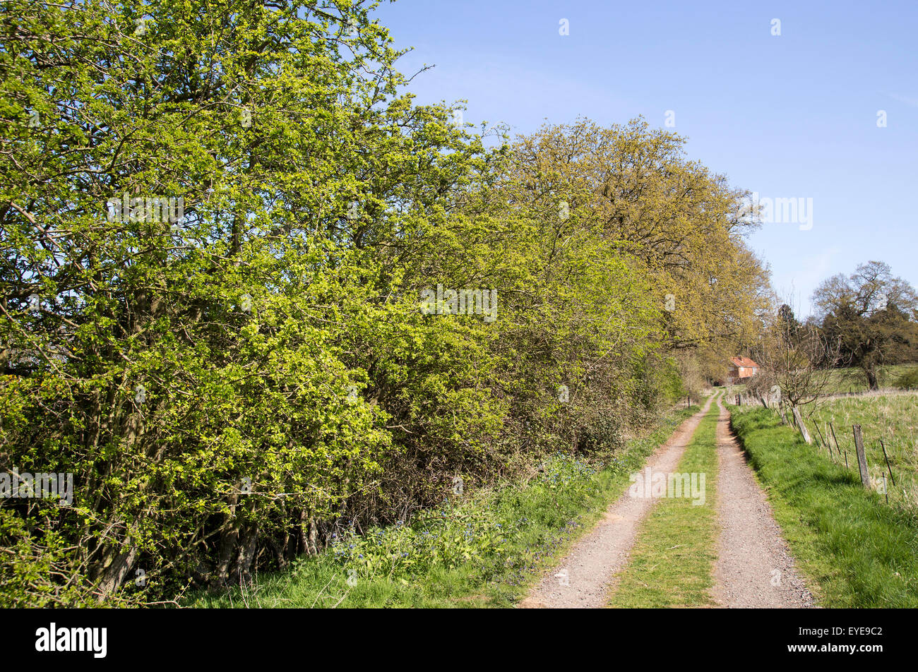 Long straight country lane passing field and hedgerow, Sutton, Suffolk, England, UK - Stock Image