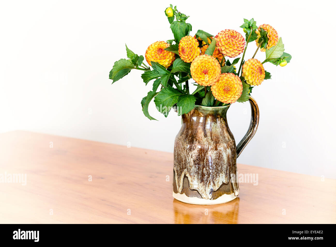 Pompom dahlias from the home garden in a pottery pitcher. - Stock Image