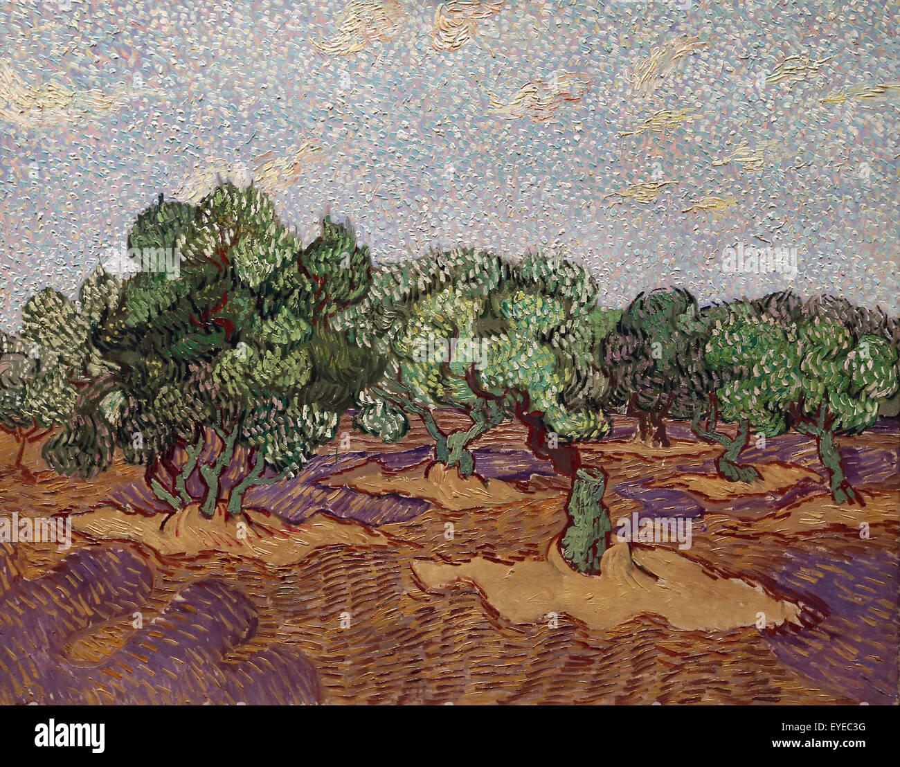 Vincent van Gogh (1853-1890). Dutch painter. Olive Trees, 1889. Oil on canvas. Metropolitan Museum of Art. NY. USA. - Stock Image