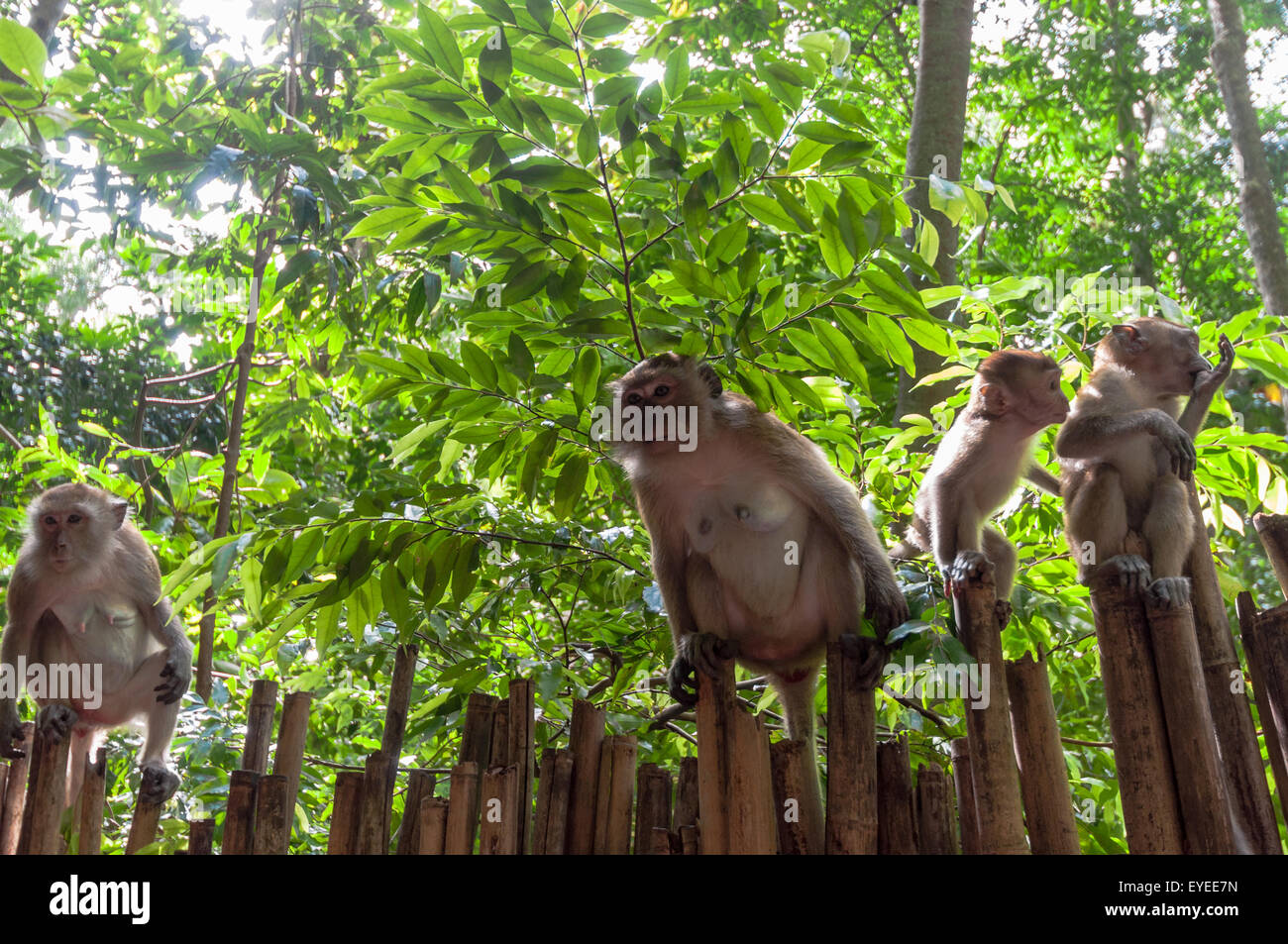 Railay Beach In Krabi Thailand Wild Monkeys Stock Photo