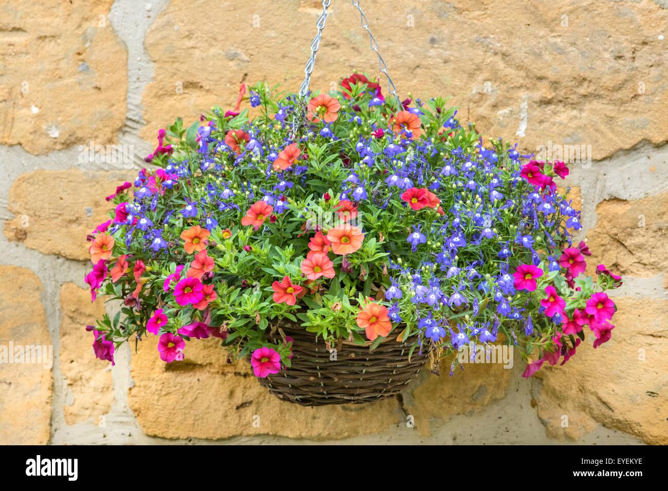 Hanging basket - Stock Image