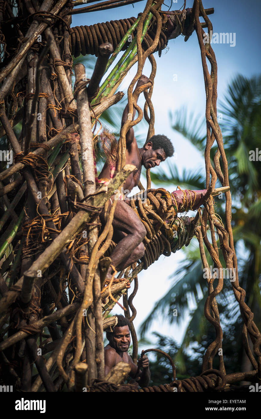 Land diver works to secure the diving platforms on the Pentecost Land diving tower; Pentecost Island, Vanuatu - Stock Image