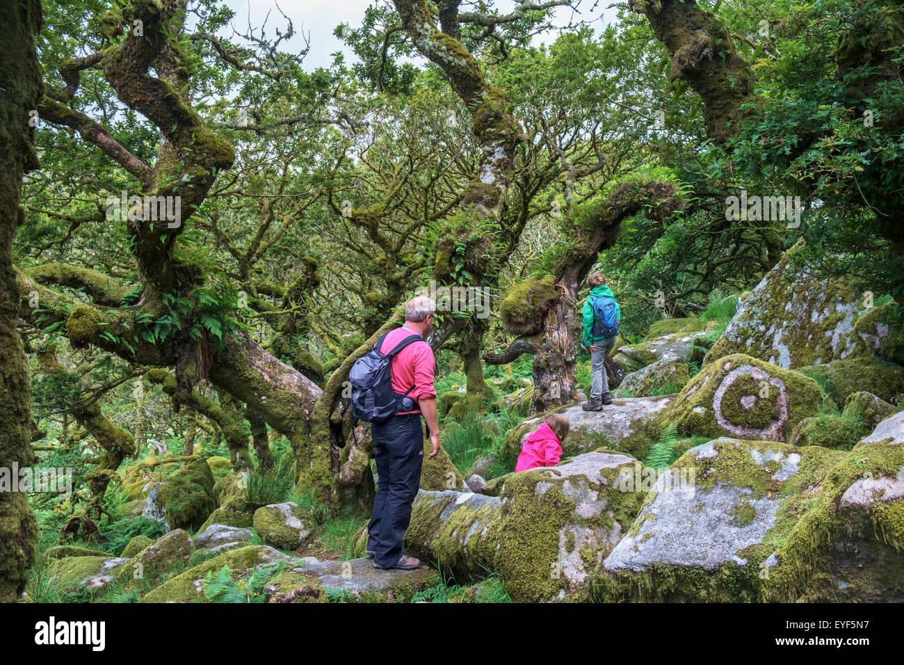 A family walking in Wistman's Wood, a high-altitude oakwood (Quercus robur), near Two Bridges, Dartmoor, Devon, - Stock Image