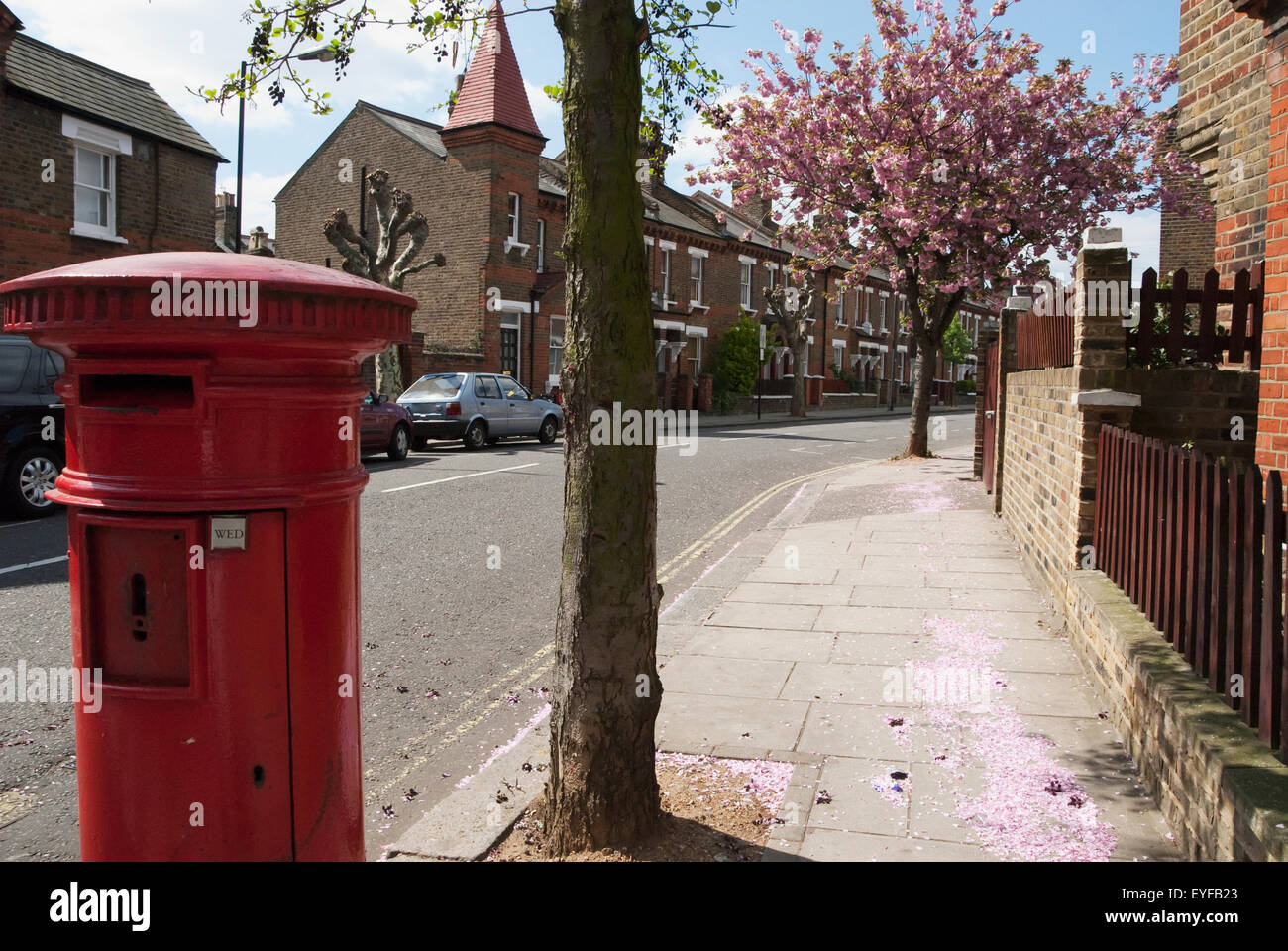 Cherry Blossom Tree And Red Uk Postal Box In North West London, England, Uk - Stock Image