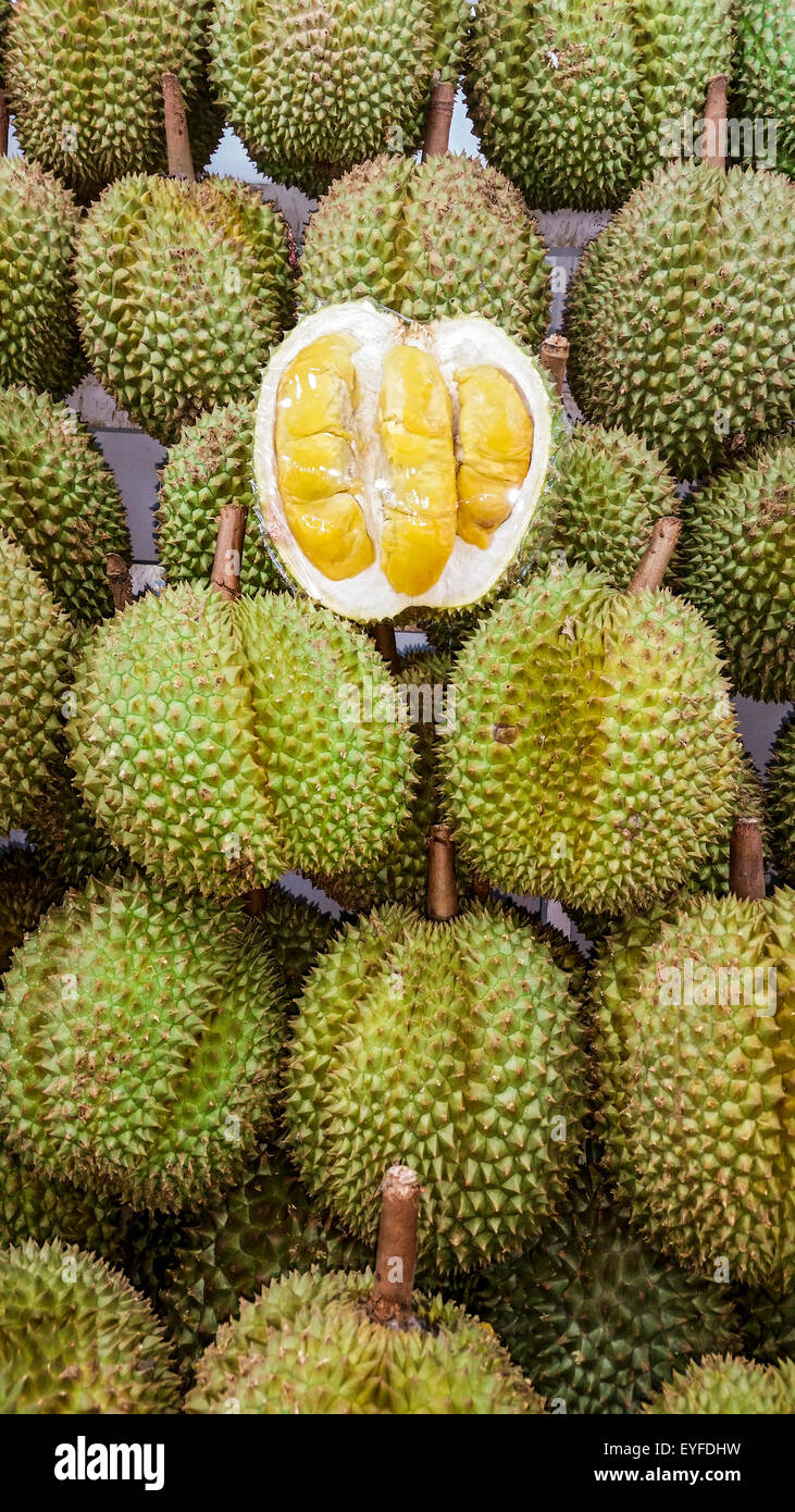 Famously smelly durian fruit, for sale at a night market in Singapore. The sickly sweet smell from this fruit is - Stock Image