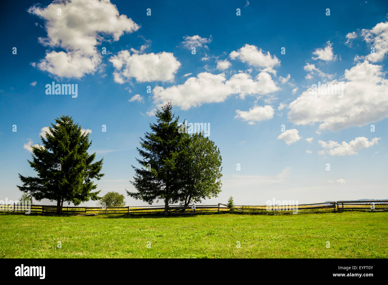 Shot took in a cloudy day somewhere in Marisel, Cluj, Romania - Stock Image