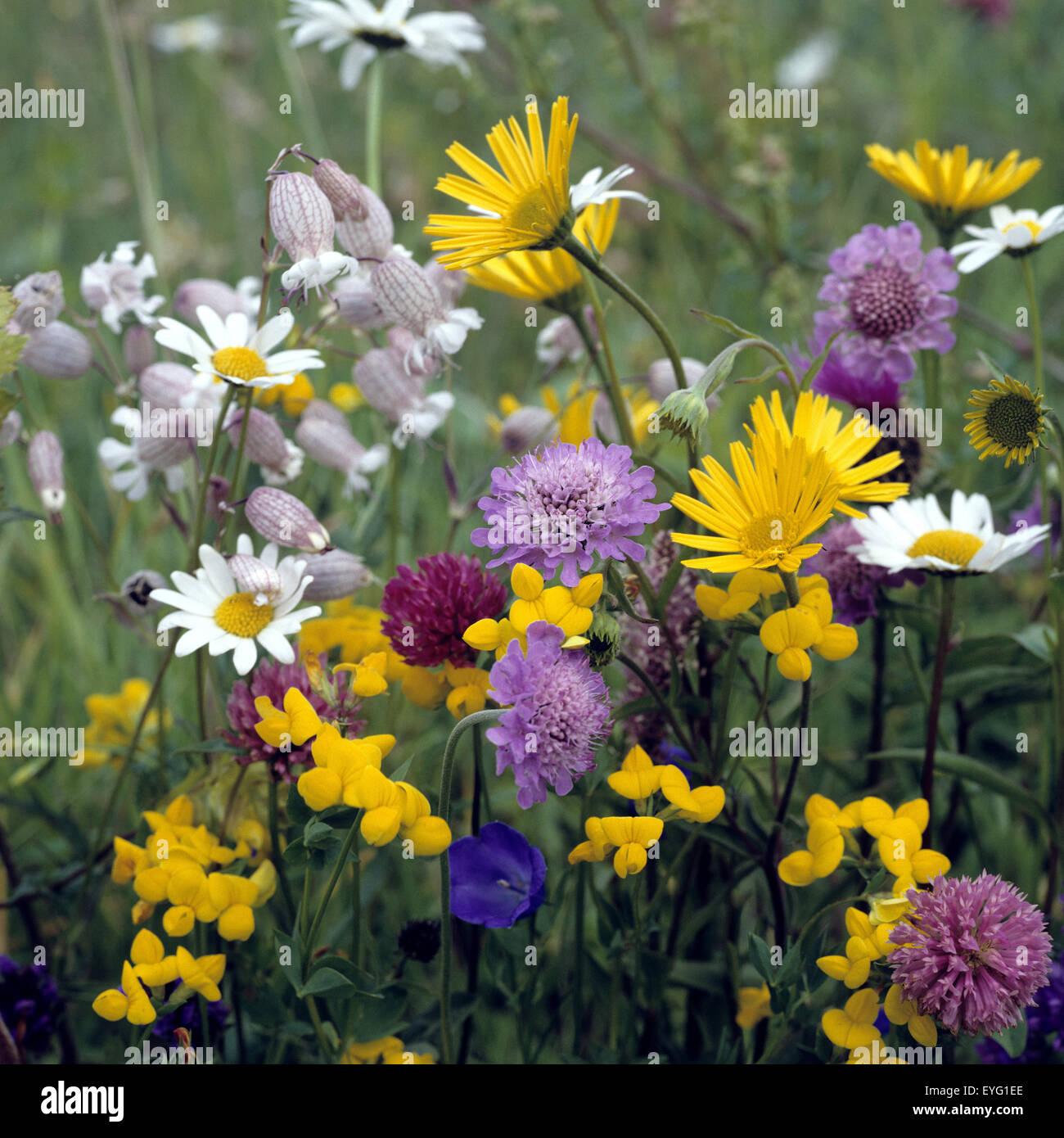 blumenwiese wiesenblumen wildblumen wiese blumen. Black Bedroom Furniture Sets. Home Design Ideas