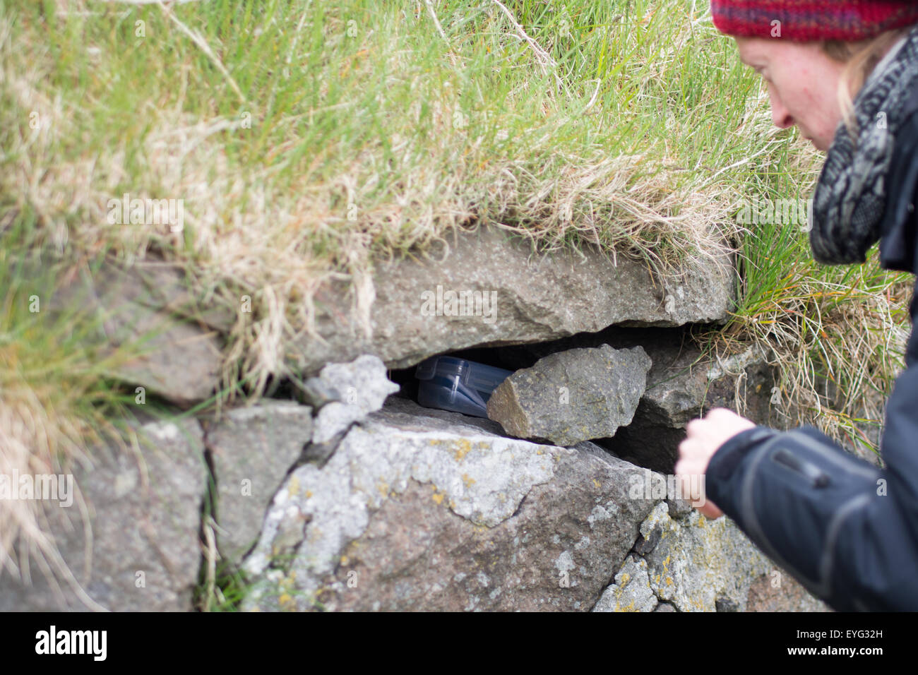 Young woman finding a geocache in a plastic box in a stone wall - Stock Image