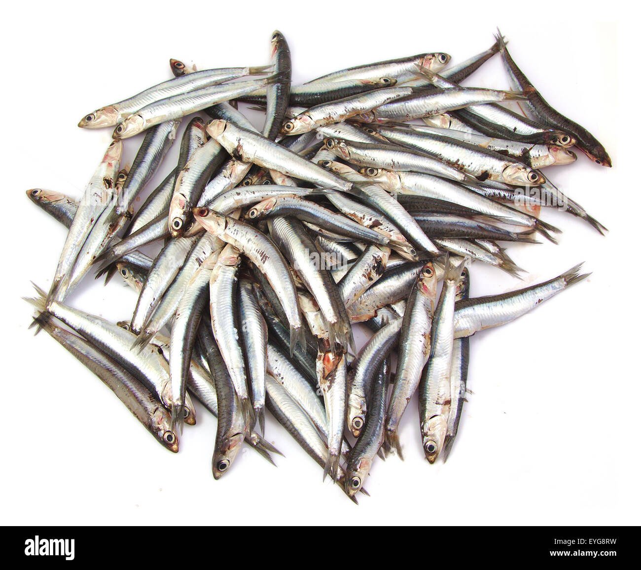 Bunch of anchovies on white background Stock Photo