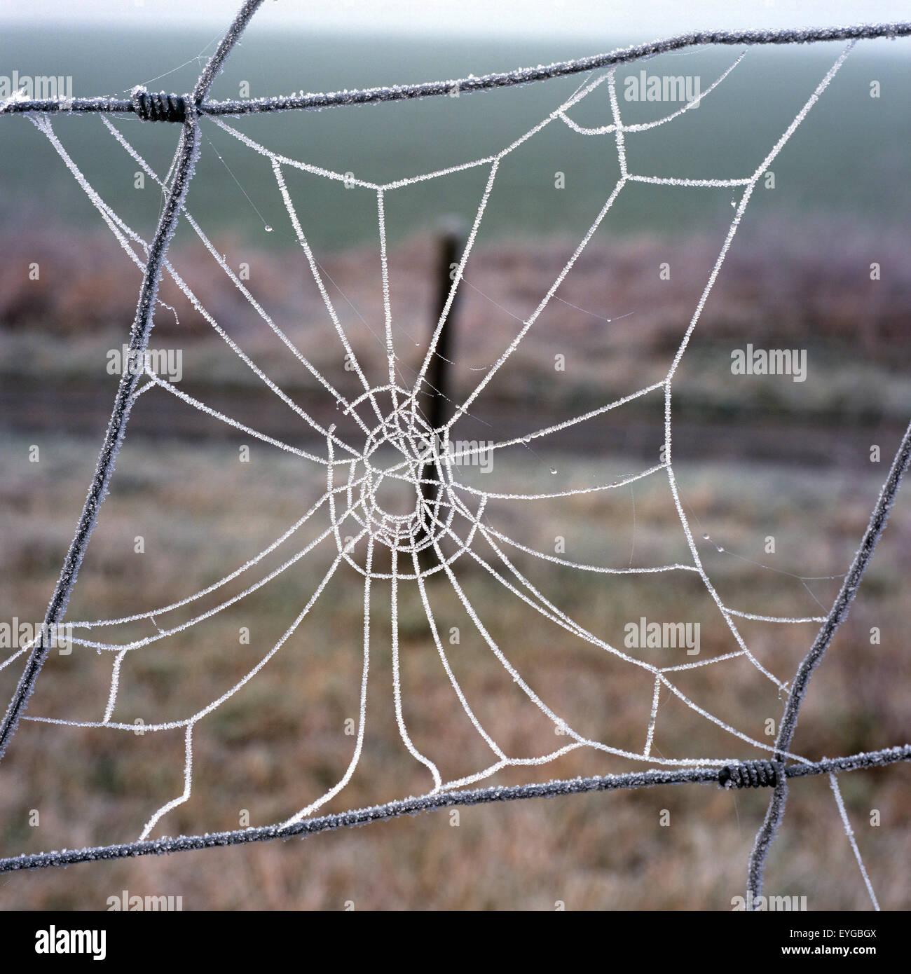 Spinnwebe, - Stock Image