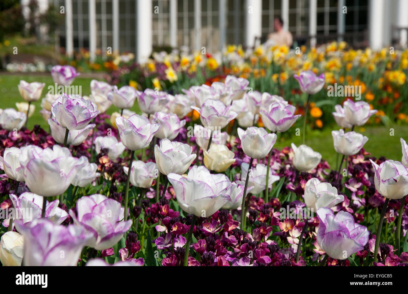 Spring flowers in the formal gardens at wollaton hall stock photo spring flowers in the formal gardens at wollaton hall nottinghamshire england uk mightylinksfo